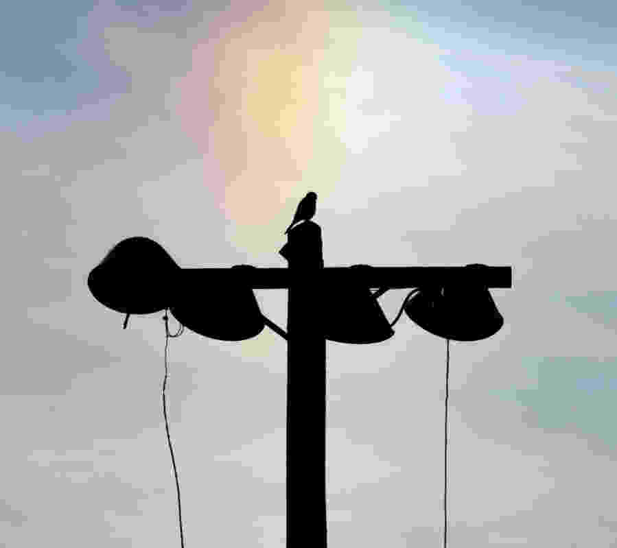 kestrel rainbow silhouette