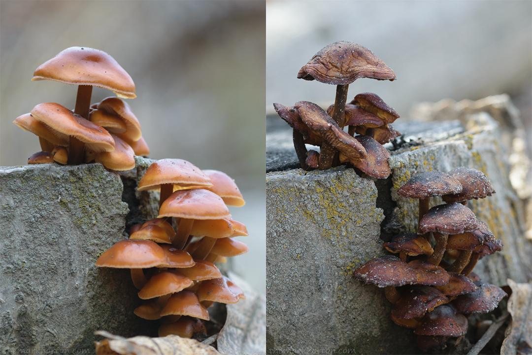 Mushrooms Revisited