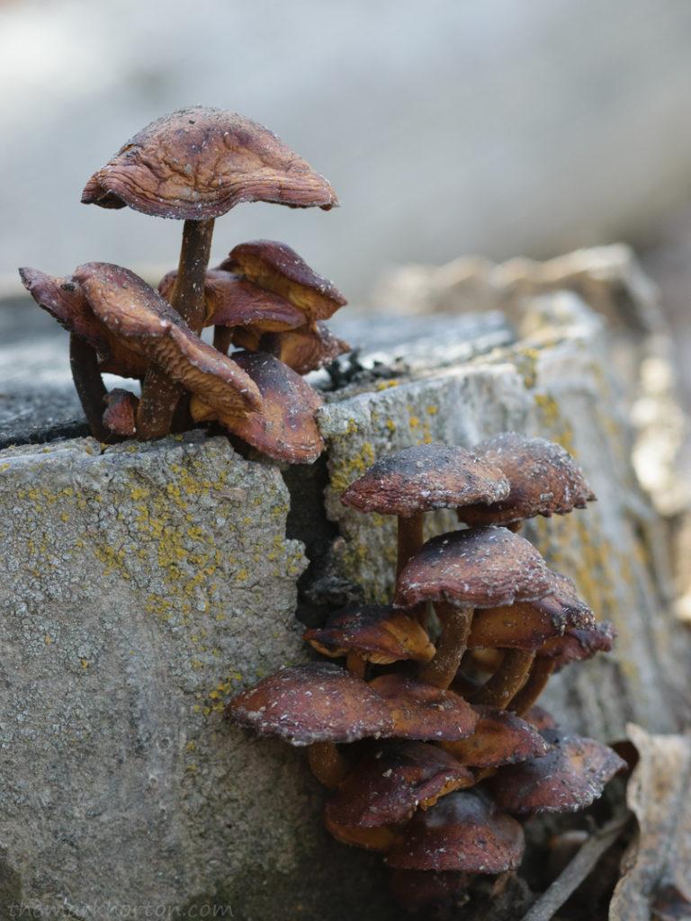 decaying mushrooms