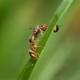 ants kissing