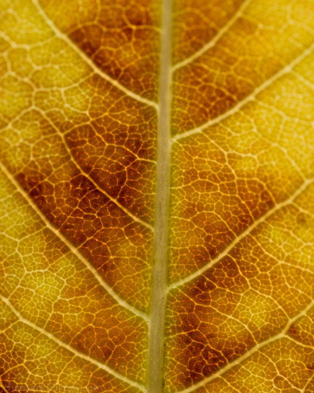 Leaf 2018