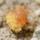 spider mite eating pollen