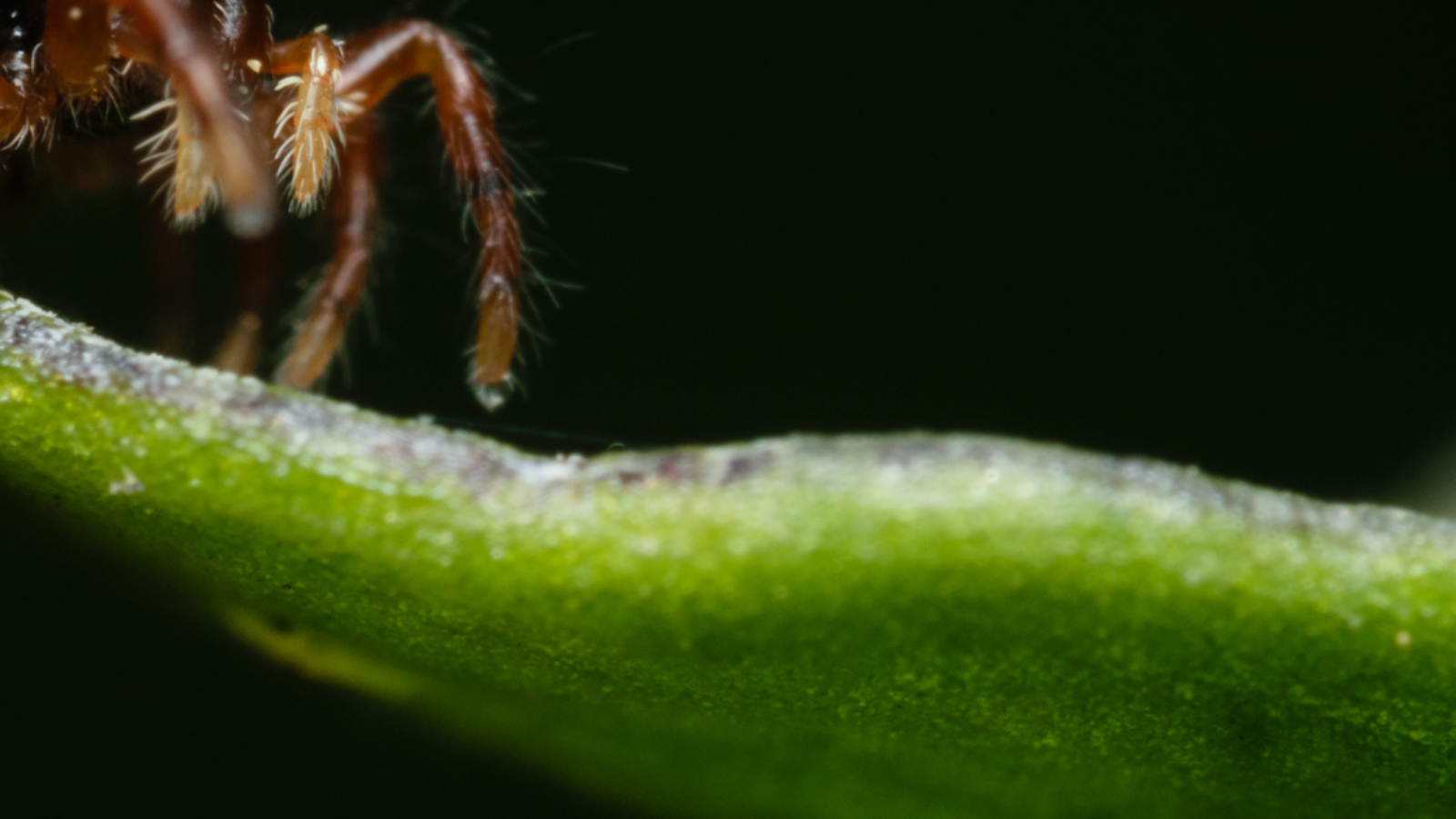 Super Scary Spider Featured Image